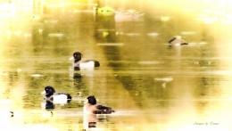 "Wetlands ""Watercolour""."