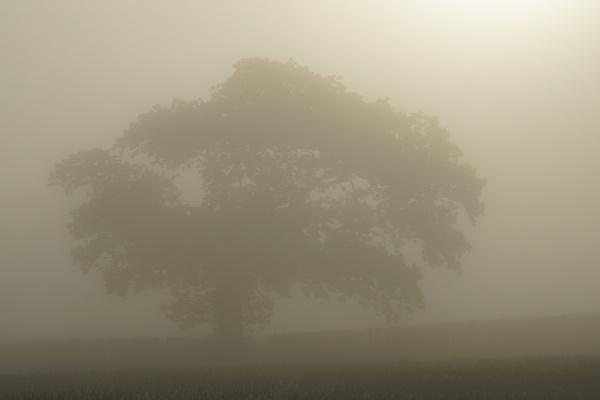 Morning Tree by PeterAS