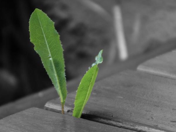 Weeds by StevePushman