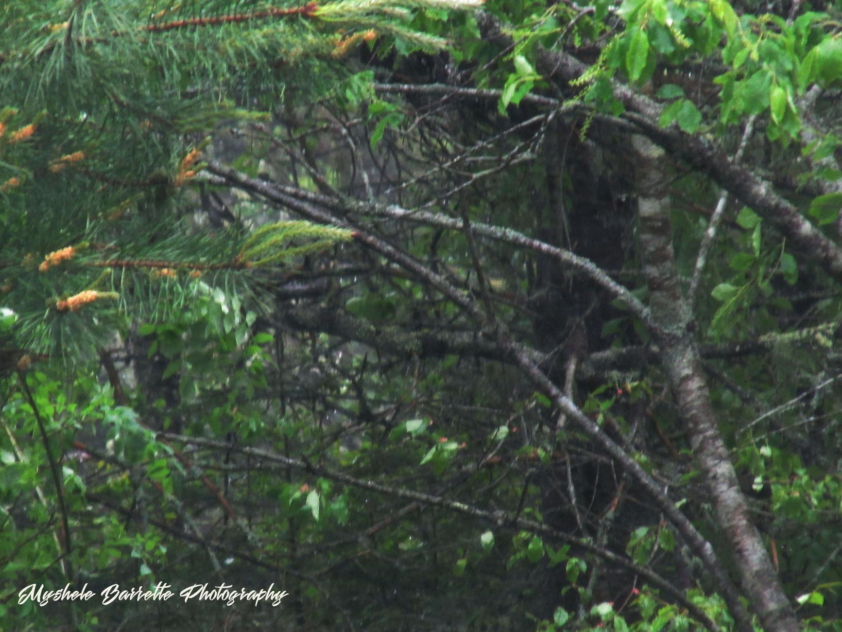 Crook tree