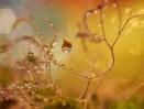 The little garden of unearthly delight by littleflea
