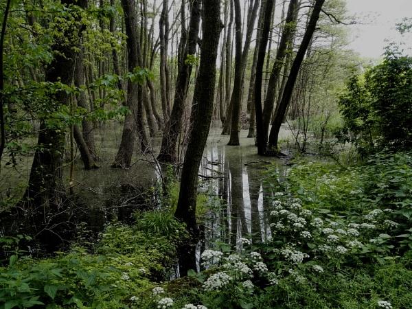 Muddy Reflections by PentaxBro