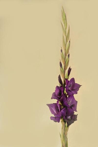 Flowers by sjr