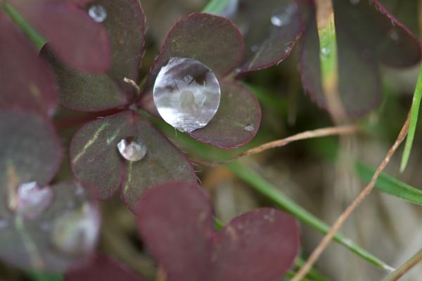 Raindrop Reflection by kellyhope12