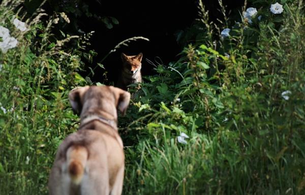 Fox & Hound by Jenks