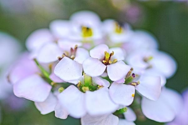 Flower Macro. by Kezz