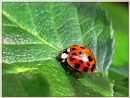 Ladybird by Sylviwhalley