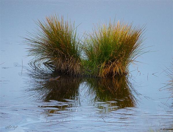 Papaitonga Wetland Reserve. (0741) by paulknight