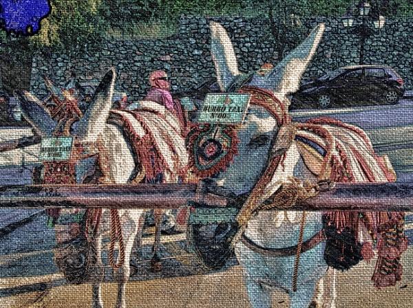 Donkeys. by WesternRed