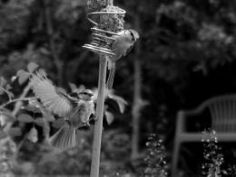 Photo : Garden Residents