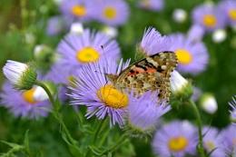 Butterfly on blue flower