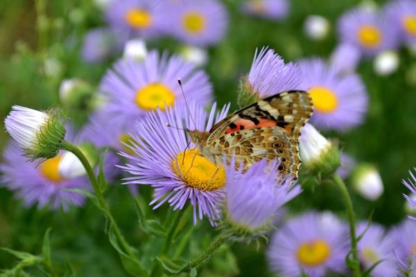 Butterfly on blue flower by Laslo