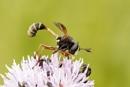 Bug by ali63