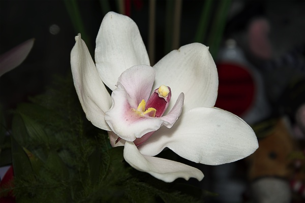 beautiful orchid by binder1