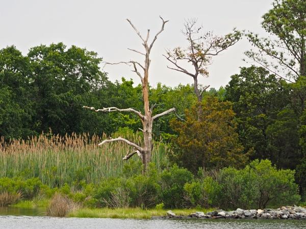 sailing on the Chesapeake #8 by handlerstudio