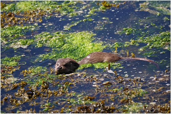 Otter 1 by johnriley1uk