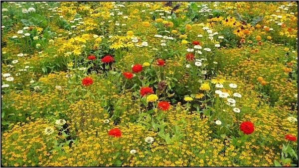 summer flowers\' meadow by FabioKeiner