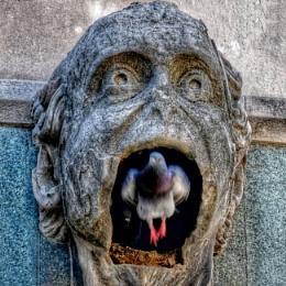 Big mouth life