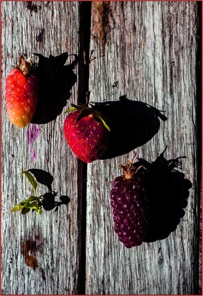 morning fruit shadows by estonian