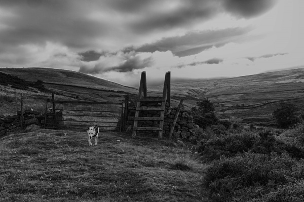 Pennines by BillRookery
