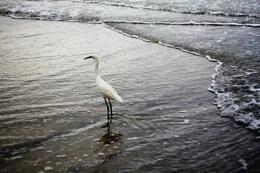 Bird on Gulf 2