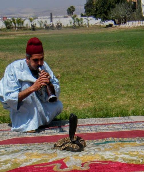 Snake Charmer. Agadir, Morrocco by Don20