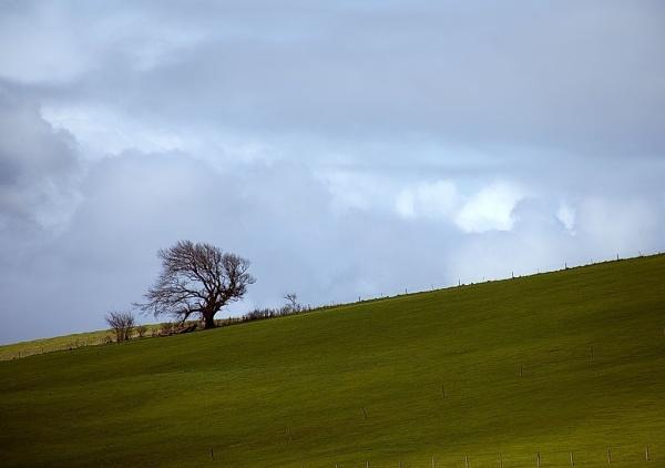 Windswept by DianneKG