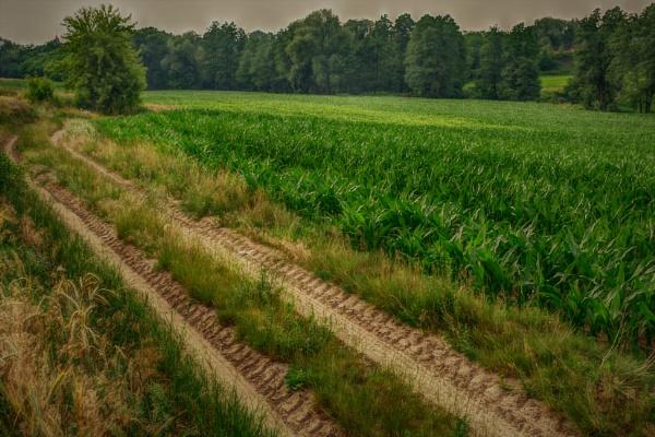 Corn Fields Road by PentaxBro