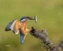 Kingfisher Landing by KBan