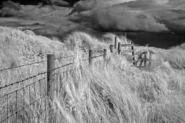 Photo : Dune Fence
