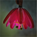 Exotic Flower by MalcolmM