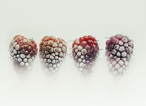 Frozen Loganberries by helenlinda