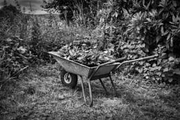 "Photo : ""Wheelbarrow"""