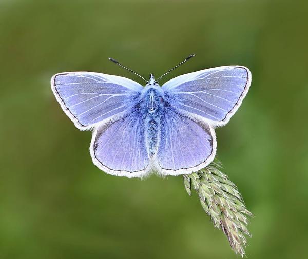 Blue by bluetitblue
