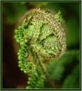 Alien Fern............? by PhilT2