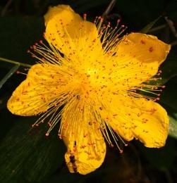 A tempting flower