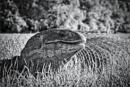 Reptiles Rule by RLF