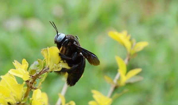 wasp by prabhuv