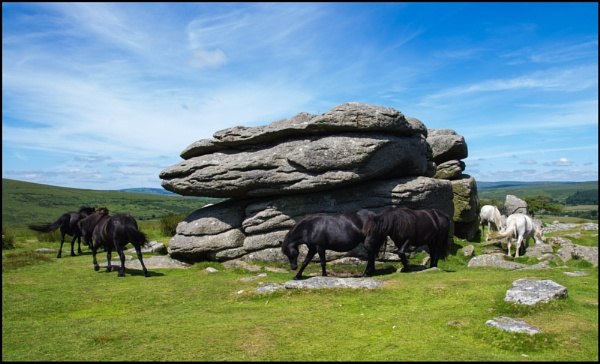 Dartmoor Ponies by bwlchmawr