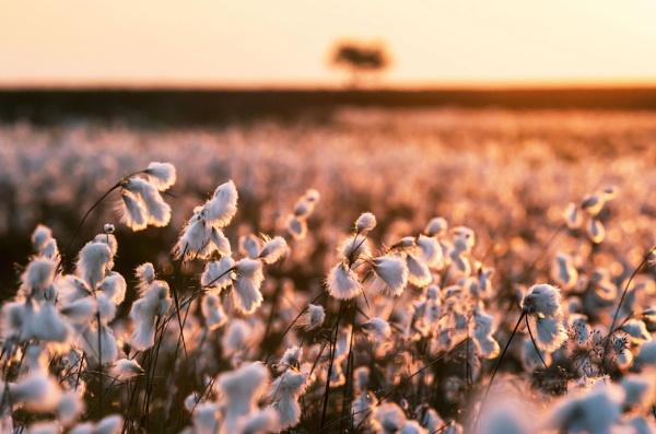 Sunset Bloom by Trevhas