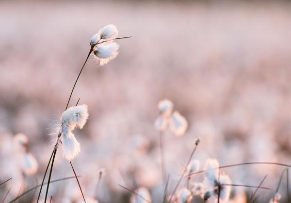 Pastel Moment by Trevhas