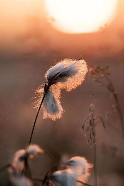 Sun Kissed by Trevhas