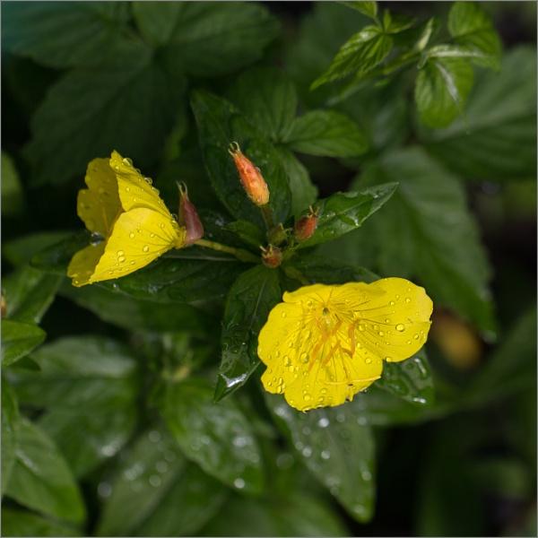 Yellow by banehawi