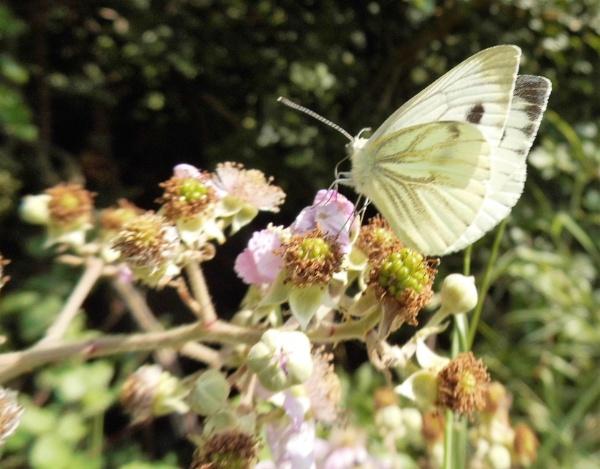 amazing butterfly by jenny007