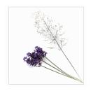 Lavender & Grass by deavilin