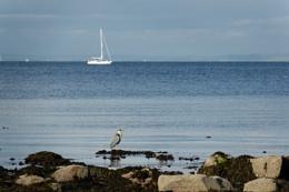 Photo : Whiting Bay Heron