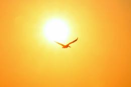 Pelican at Sunset in Nuevo Vallarta, Mexico