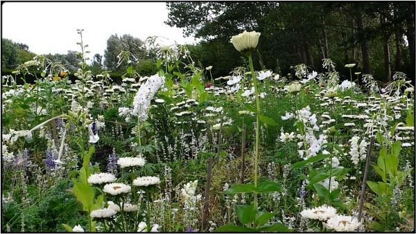 summer flowers\' meadow 2 by FabioKeiner