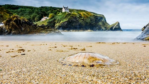 Jellyfish by Stevetheroofer