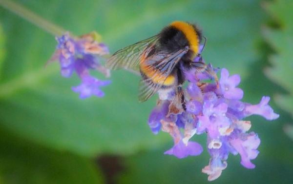 Lilac Wine by DaveRyder